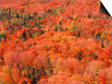Fall Colors, Northwoods, Minnesota, USA Posters by Art Wolfe
