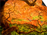 Japanese Maple Trees in Winterthur Gardens, Wilmington, Delaware, Usa Prints by Jay O'brien