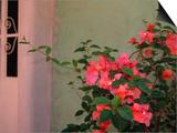 Detail of Bougenvilla in Bloom, Puerto Vallarta, Mexico Posters by John & Lisa Merrill