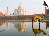 Young Boy on Camel, Taj Mahal Temple Burial Site at Sunset, Agra, India Poster by Bill Bachmann