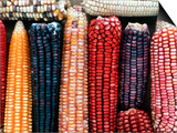 Varieties of Corn that Lacandons Grow in Their Milpas, Selva Lacandona, Naha, Chiapas, Mexico Art by Russell Gordon