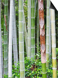 Bamboo at Shukkei-En Garden, Hiroshima, Japan Posters by Rob Tilley