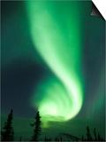 Aurora Borealis, Fairbanks, Alaska, USA Posters af Julie Eggers