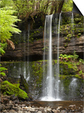 Russell Falls, Mount Field National Park, Tasmania, Australia Posters by David Wall