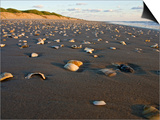 Dunes and Seashells on Padre Island, Texas, USA Affiches par Larry Ditto