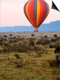 Hot-Air Ballooning, Masai Mara Game Reserve, Kenya Poster by Kymri Wilt