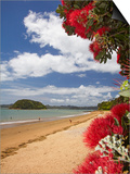 Pohutukawa Tree and Beach, Paihia, Bay of Islands, Northland, North Island, New Zealand Posters by David Wall