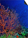 Underwater, Bonaire, Netherlands Antilles Prints by Connie Bransilver
