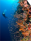 Diver With Light Next To Vertical Reef Formation, Pantar Island, Indonesia Prints by  Jones-Shimlock