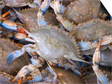 Blue Crabs, Maine Avenue Fish Market, Washington DC, USA, District of Columbia Print by Lee Foster