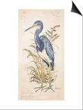 Tricolor Heron Posters by Chad Barrett