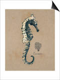 Vintage Linen Seahorse Posters by  Regina-Andrew Design