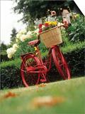 Vintage Bicycle II Prints by Philip Clayton-thompson