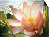 Lotus Landing Posters by Elizabeth Horning