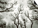 Crow Rookery Poster by Jamie Cook