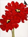 Red Splendor I Poster by Soraya Chemaly
