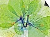 Fleur Serree III Prints by Shams Rasheed