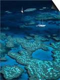 Great Barrier Reef, Queensland, Australia Posters by Danielle Gali