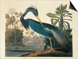 Louisiana Heron Plate 217 Posters by  Porter Design