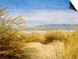 Dune Grass 4 Posters by Thea Schrack