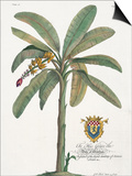 Banana Tree Poster by  Porter Design