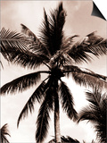 Sepia Palm 3 Posters by  Porter Design