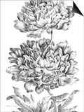 Heroic Peony Print by  Porter Design