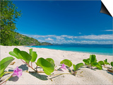 South Pacific, Fiji, Kadavu, Deserted Beach on the East Coast of Yaukuve Island Plakater af Paul Harris