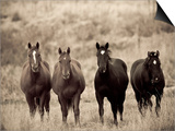 Horses, Montana, USA Prints by Russell Young