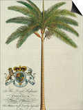 King Palm Prints by  Porter Design