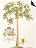 Papaya Tree Prints by  Porter Design