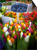 Flower Market, Amsterdam, Netherlands Prints by Neil Farrin