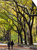 The Mall and Literary Walk with American Elm Trees Forming the Avenue Canopy, New York, USA Posters by Gavin Hellier