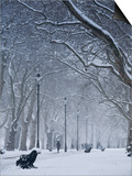 Hyde Park Snow Scene, London, England, UK Prints by Neil Farrin