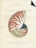 Conchology Nautilus Art by  Porter Design