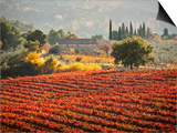 Italy, Umbria, Perugia District, Autumnal Vineyards Near Montefalco Prints by Francesco Iacobelli
