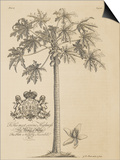 Papaya Tree Art by  Porter Design
