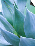 Agave I Print by Thea Schrack