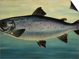Atlantic Salmon Posters by  Porter Design
