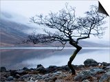 Solitary Tree on the Shore of Loch Etive, Highlands, Scotland, UK Art by Nadia Isakova