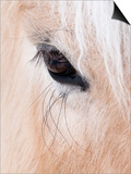 Close-Up of a Horse'S Eye, Lapland, Finland Posters by Nadia Isakova