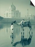 Camal and Driver, Taj Mahal, Agra, Uttar Pradesh, India Posters by Doug Pearson