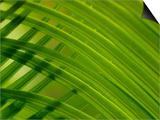 Close-up of Palm Leaf Prints