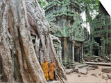 Cambodia, Siem Reap, Angkor, Ta Prohm Temple Posters by Steve Vidler