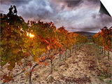 Italy, Umbria, Perugia District, Autumnal Vineyards Near Montefalco Art by Francesco Iacobelli