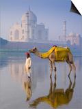 Camal and Driver, Taj Mahal, Agra, Uttar Pradesh, India Prints by Doug Pearson