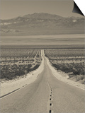 California, Mojave Desert, Amboy Road, USA Prints by Walter Bibikow