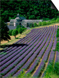Senaque Abbey and Lavender Fields, Gordes, Provence, France Prints by Steve Vidler