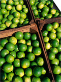 Boxes of Limes, Oxkutzcab Market, Yucatan, Mexico Posters by Paul Harris