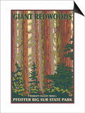Pfeiffer Big Sur State Park, California - Giant Redwoods Posters by  Lantern Press